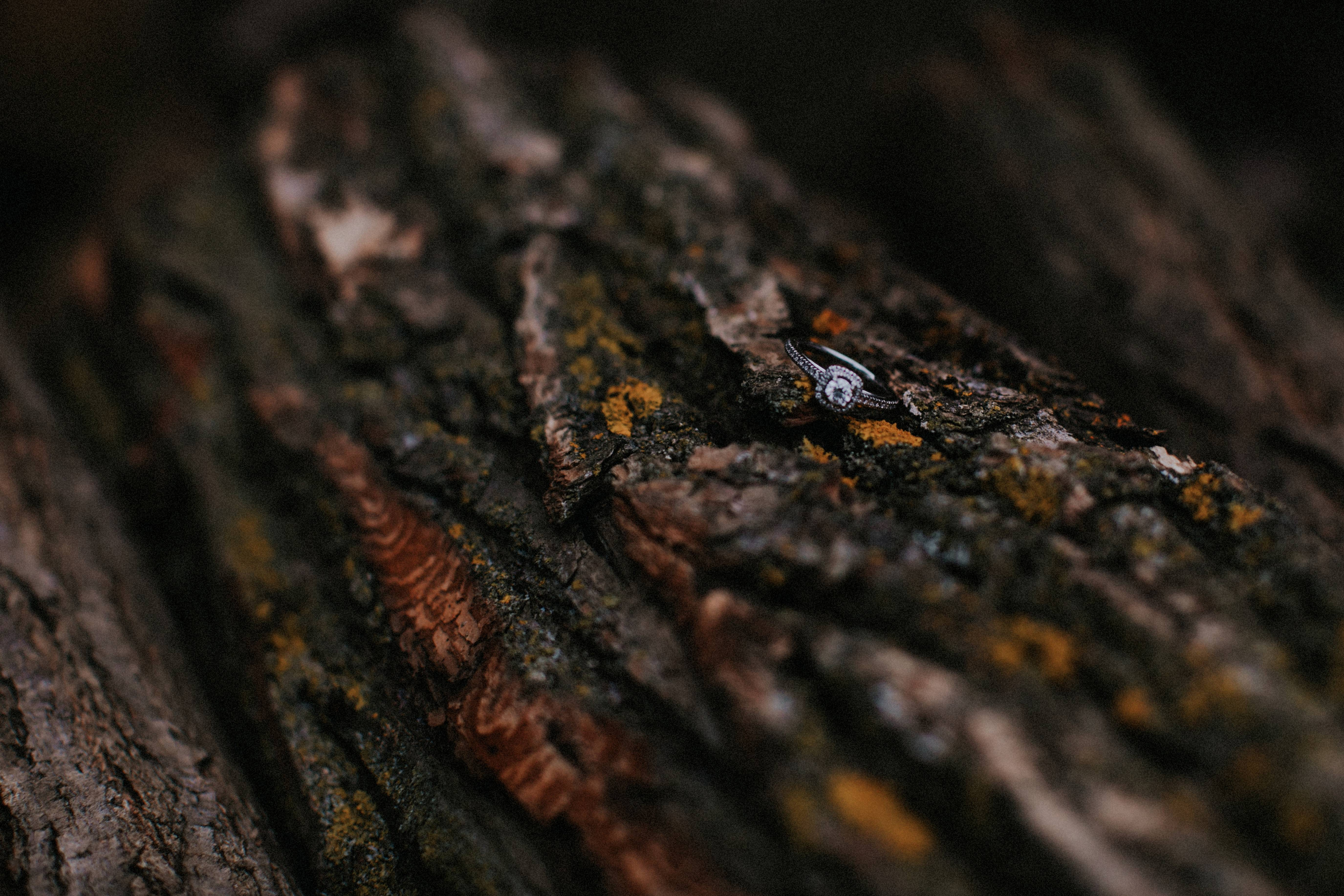engagement ring on log