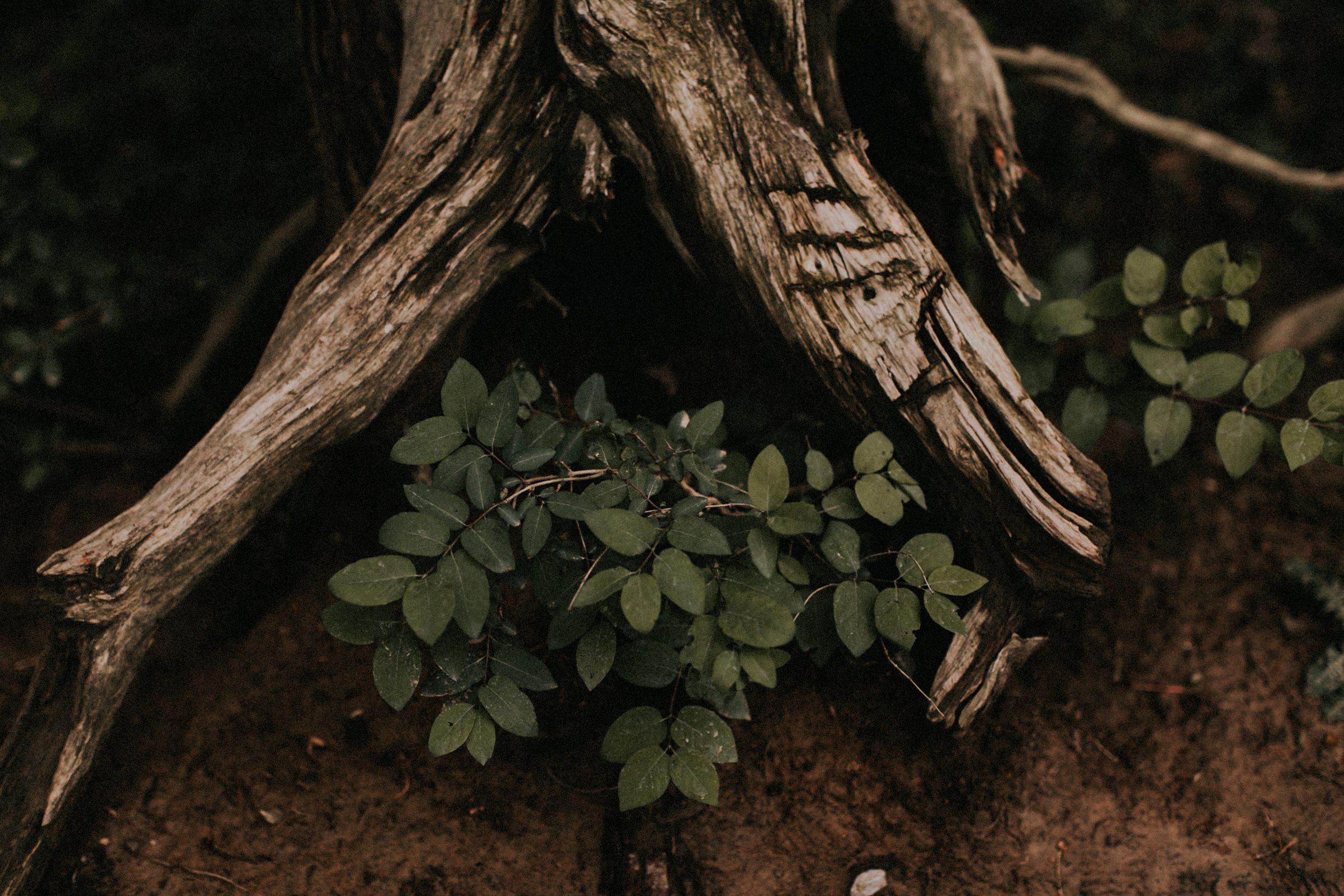 growth under tree stump