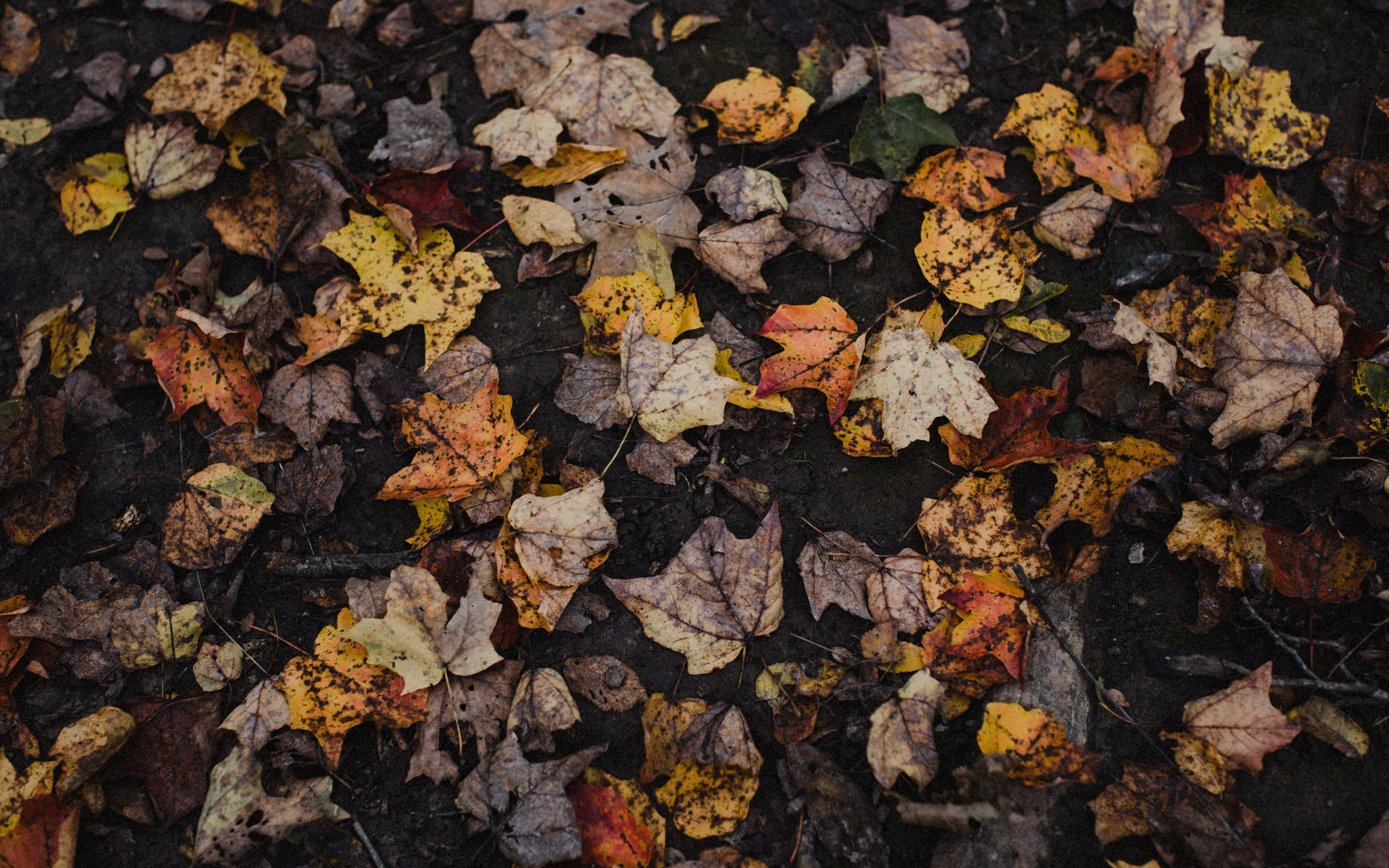 muddy leaves on the ground