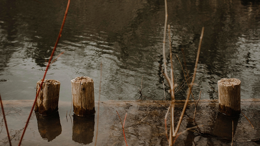 stumps in the water