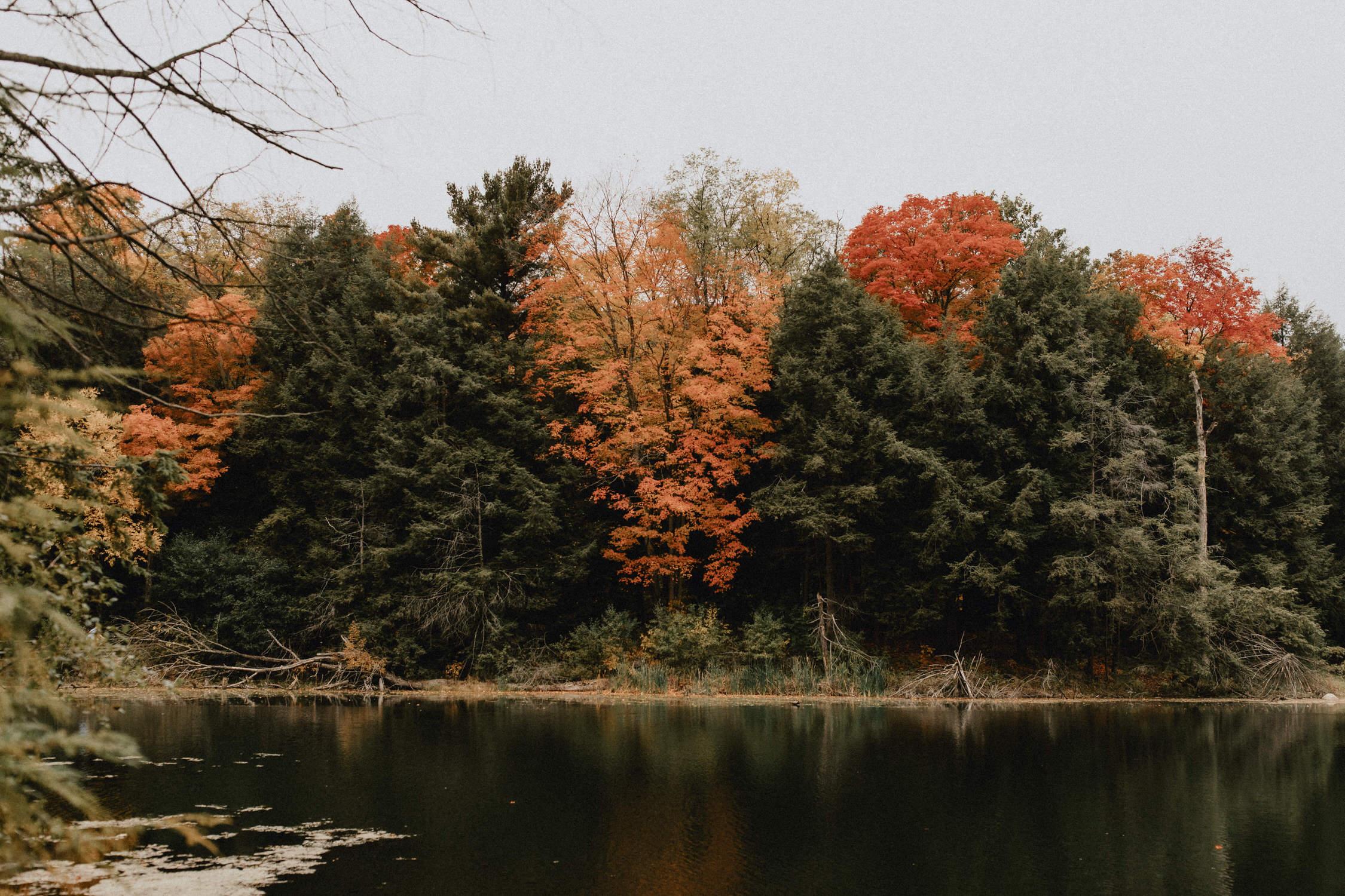 Huron Natural Area - Micro Wedding Kitchener, Ontario